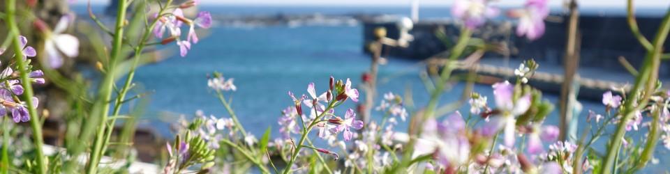 ペンション桜家のブログ 「海と空からの贈り物」