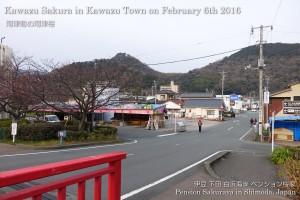 160206sakura04