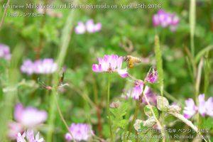160425flower01